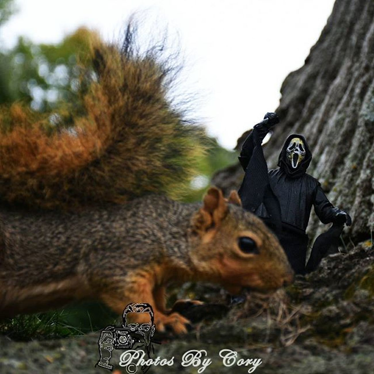 Always when they least expect it! _tyton_loves_the_monsters _tyton_ Ghostface Funwiththesquirrels Wildlife Animallover Wildlifephotography Wildlifepark Photooftheday Instadaily Instanature Natureshots Natureseeker Natureonly Natures_hub Natures_cuties Animallover Animal_captures Wildlife_perfection Feedback Ata_pickedbypaul