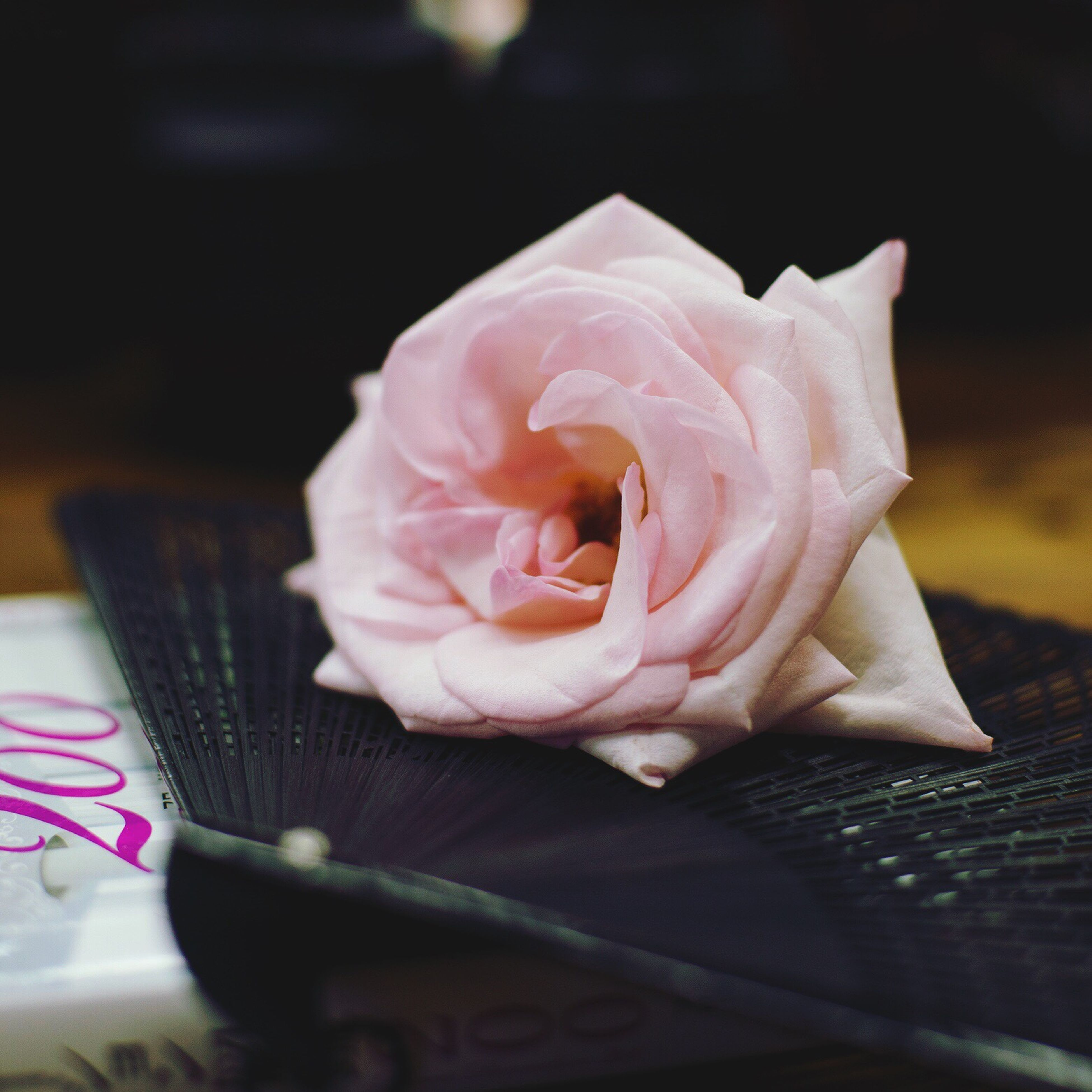 flower, petal, freshness, pink color, fragility, close-up, flower head, rose - flower, selective focus, single flower, indoors, springtime, beauty in nature, table, nature, blossom, rose, softness, botany, pink, in bloom, focus on foreground, no people