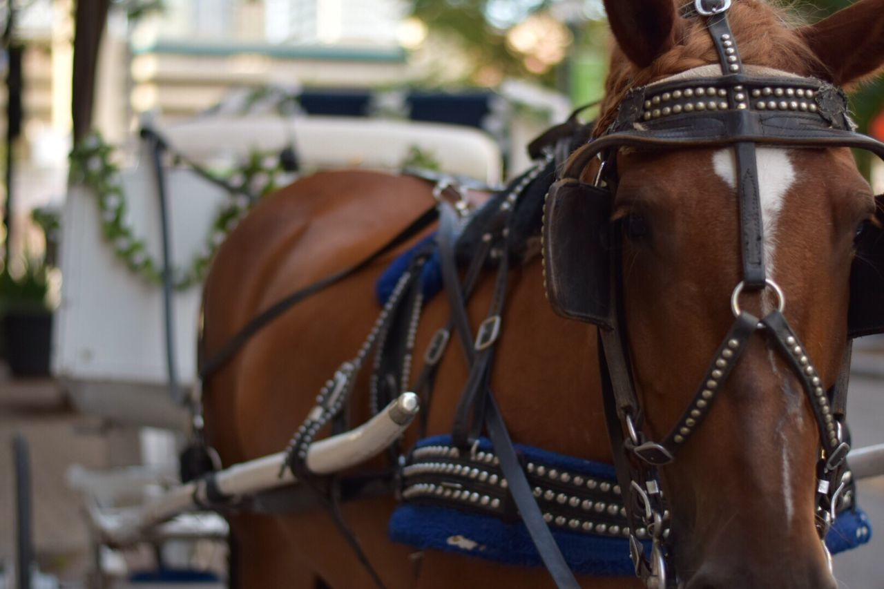 horse, working animal, domestic animals, animal themes, bridle, horse cart, mammal, horsedrawn, focus on foreground, one animal, day, outdoors, close-up, no people