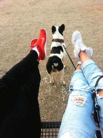 Nice day :) Enjoying Life MyLove❤ Bestfriend Nike✔ Perfekt Day Frenchbulldog Check This Out Hello World Fun Happydog