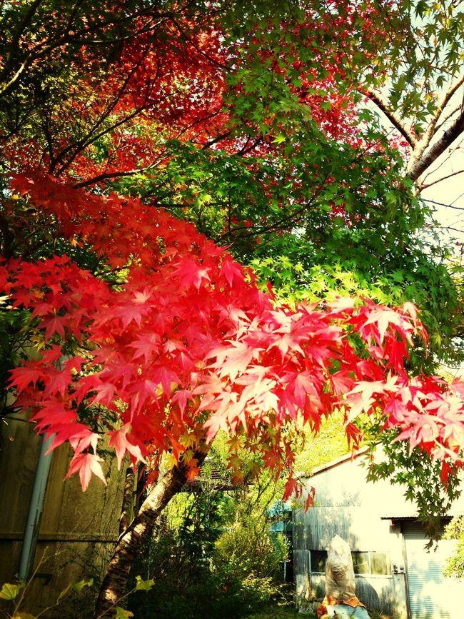 Colors Of Autumn 紅葉狩り