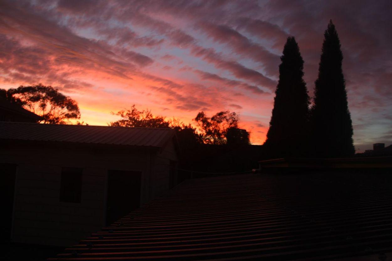 Autumn Colors Autumn Autumn Sky Autumn Sunset Darkness Before Dawn Sydney, Australia Sydney Sydney Iphoneography Mobile Photography Concord