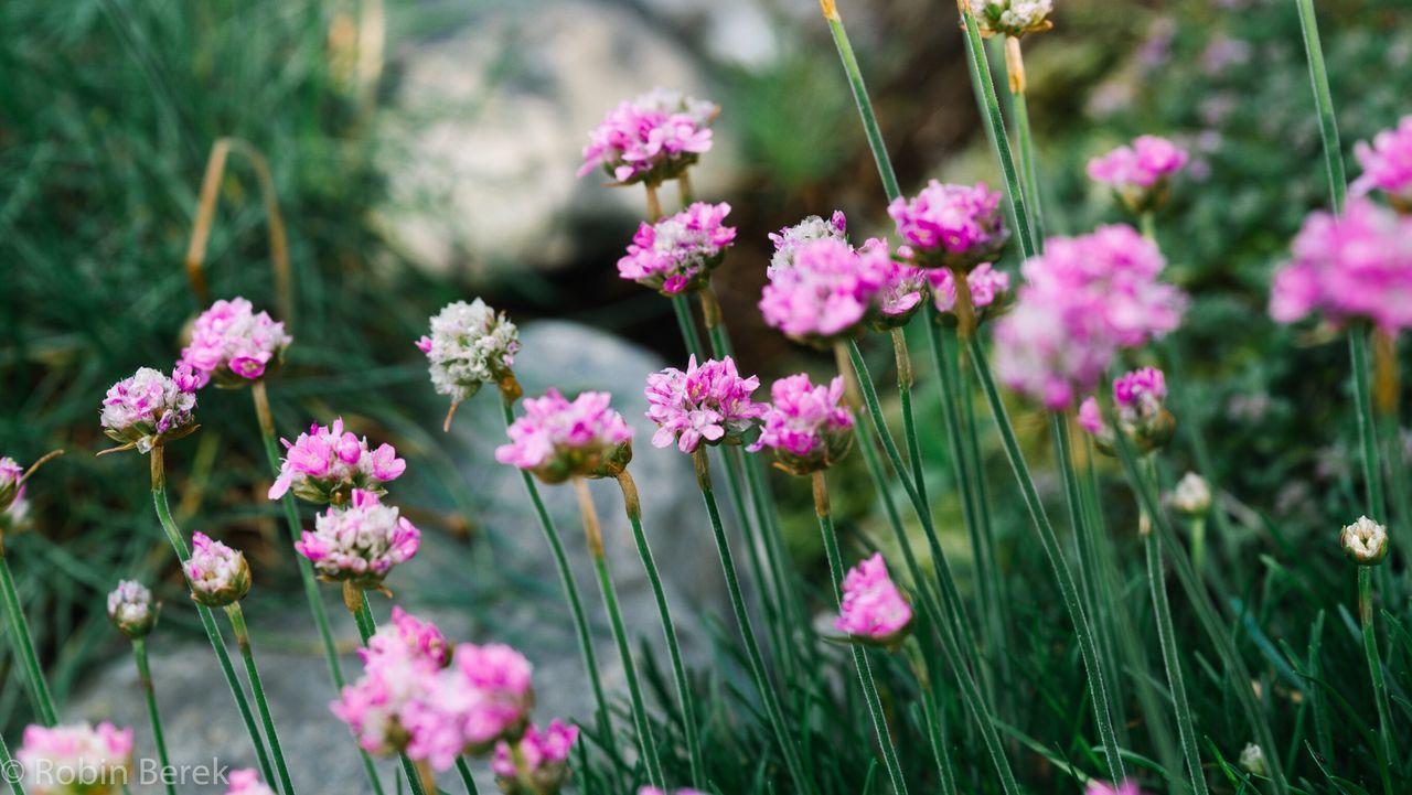 Flower Flowers Flower Head Nature Focus On Foreground Beauty In Nature Sonyalpha Sonyalpha7ii Switzerland Plant EyeEmNewHere