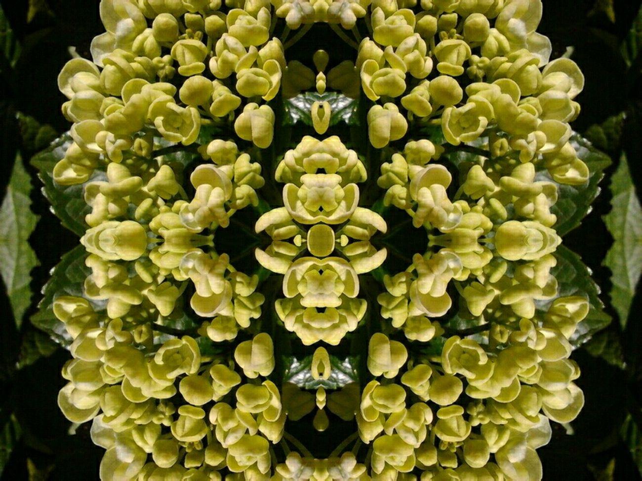 Flowers Symmetry