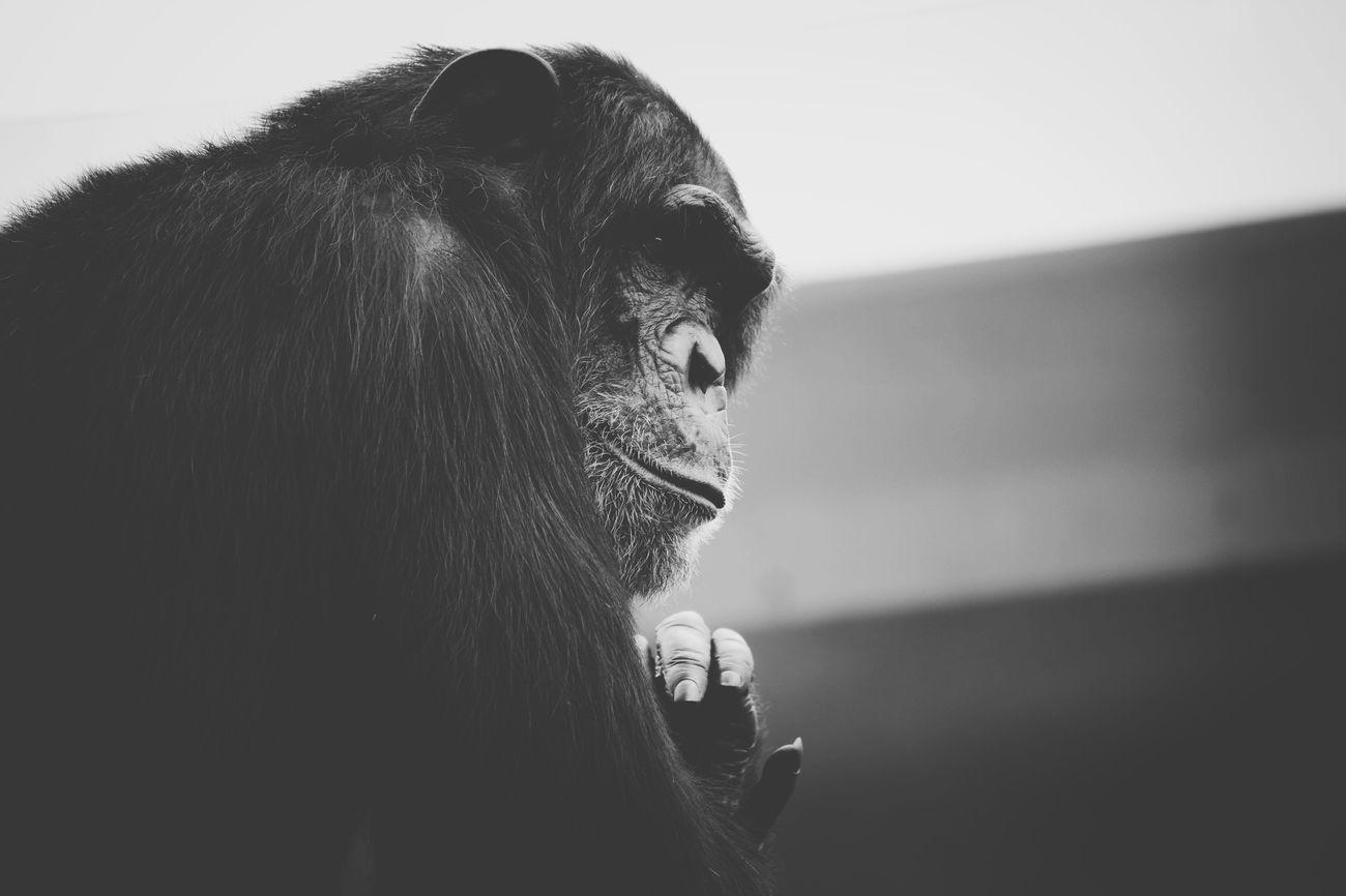 Vscocam Blackandwhite EyeEm Best Shots Eye4black&white  Animal Watching Animals Zoo Zoo Animals