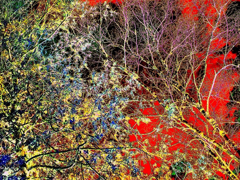 Abstract Abstractart Abstract Nature Backgrounds Trees Treetops Multicolor