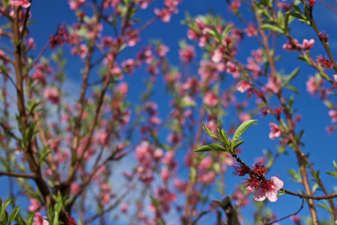 Beauty In Nature Blooming Blooming Flower Blossom Clear Sky Close-up Day Focus On Foreground Fragility Growth Leaf Low Angle View Nature No People Outdoors Plant Sky SP Tree