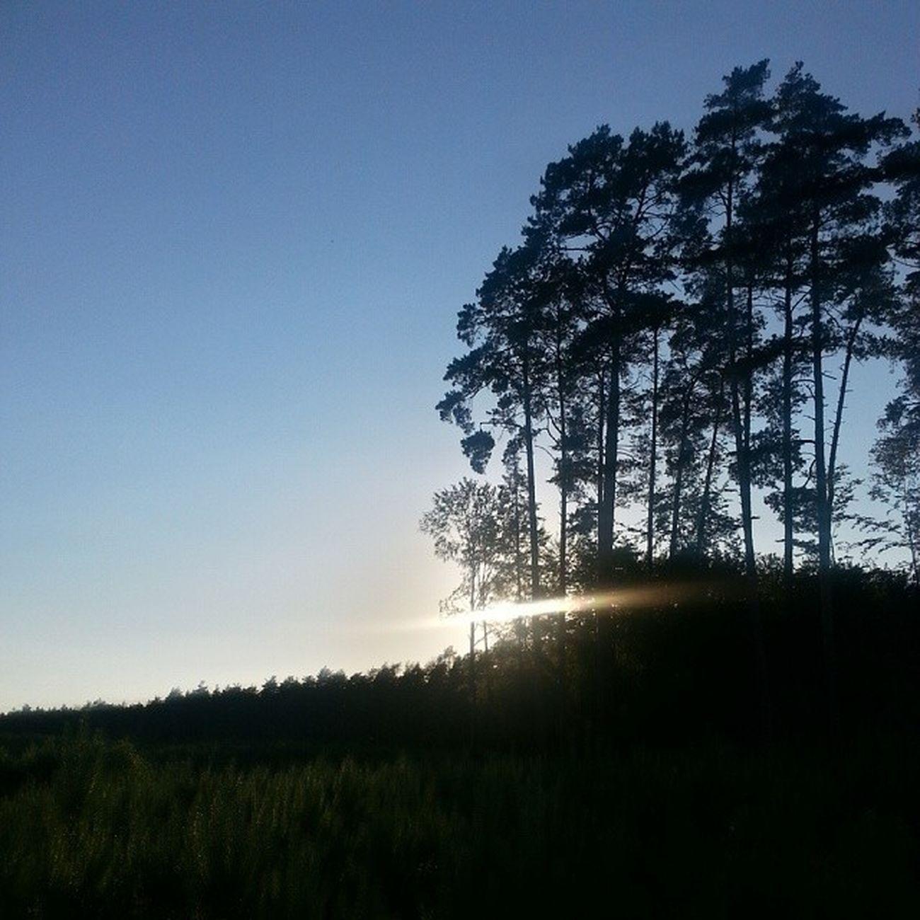Budylancuckie Podkarpacie Poland Polska trip plant treessunsetlandscape view