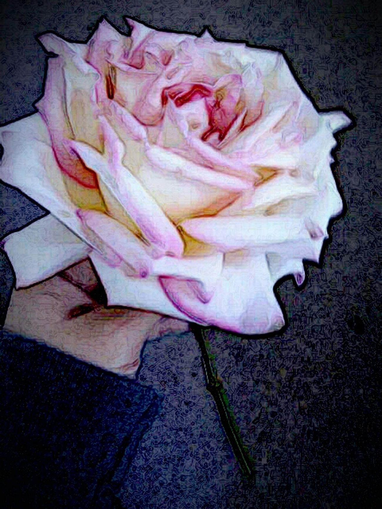 Flower Rose♥ Pretty Rose