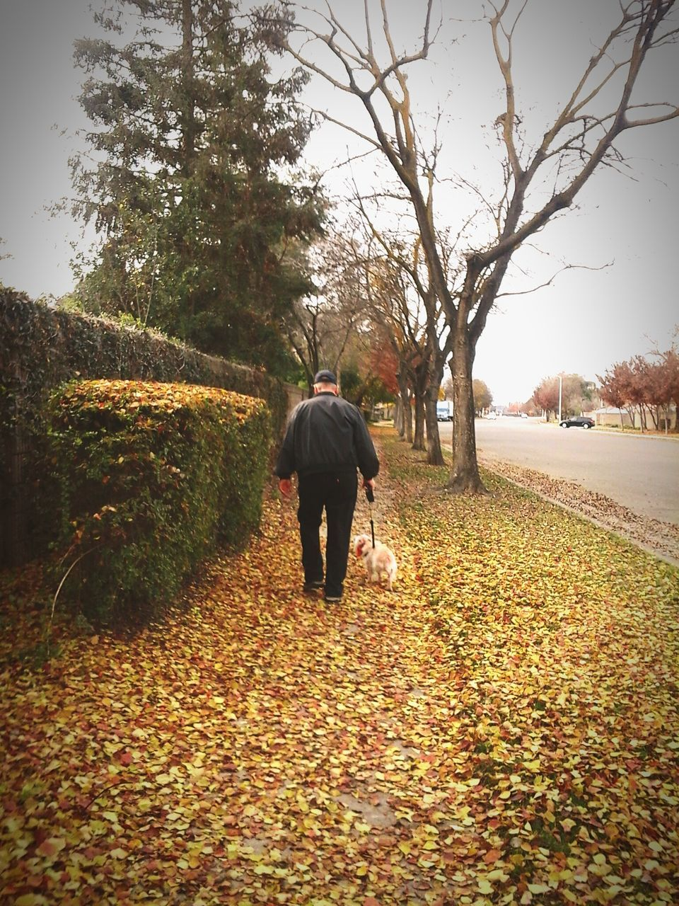 autumn, tree, change, nature, leaf, walking, rear view, landscape, beauty in nature, outdoors, forest, full length, men, day, sky, one person, people