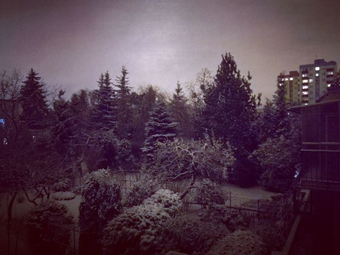 Winter is coming Tree No People Winter Nature Outdoors Sky Tranquility Snow Night