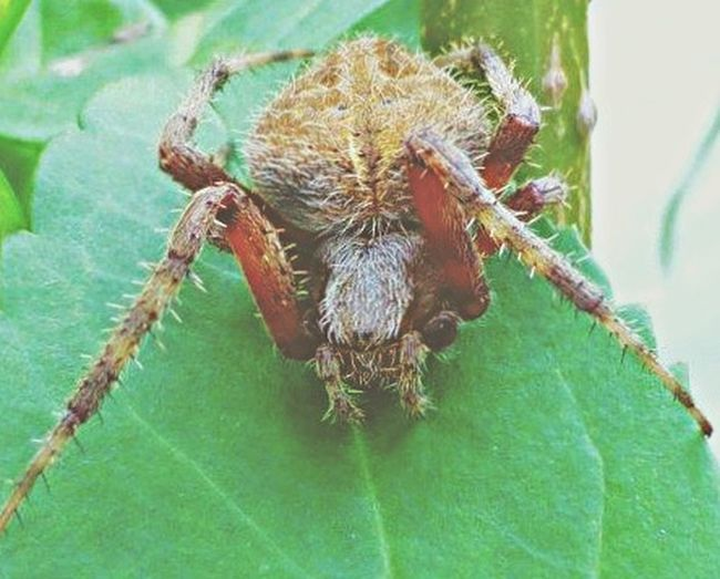 G od Morning! 😎☀️ Wildlife & Nature Macro Photography Macro Nature Arachni-therapy Arachnophobia Spider Arachnipocalypse Spider Series EyeEm Nature Lover