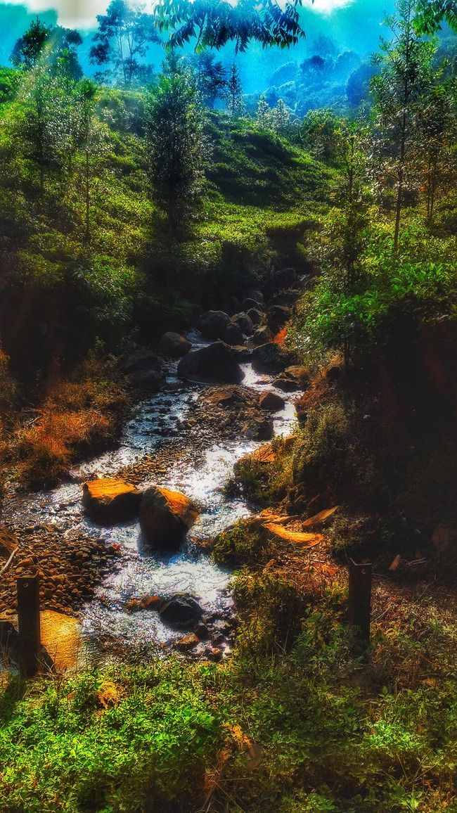 Light river Water Green Forest Nature Tree Beauty In Nature Outdoors Green Color Indonesian Street (Mobile) Photographie Exhibition Countryside