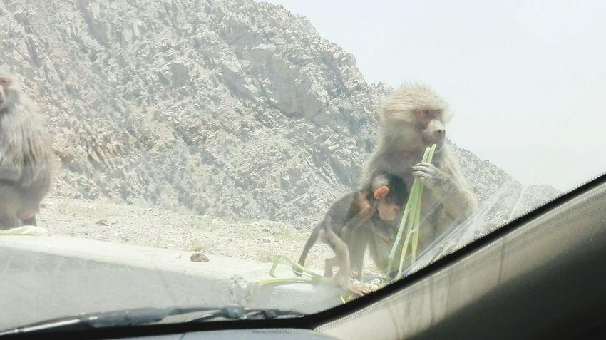 First Eyeem Photo Monkeys