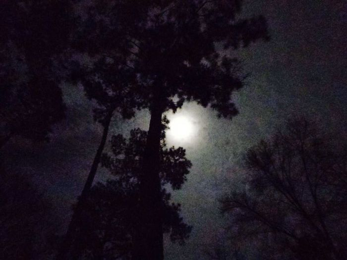 Moon among the trees Moon Among The Trees Winter Moon