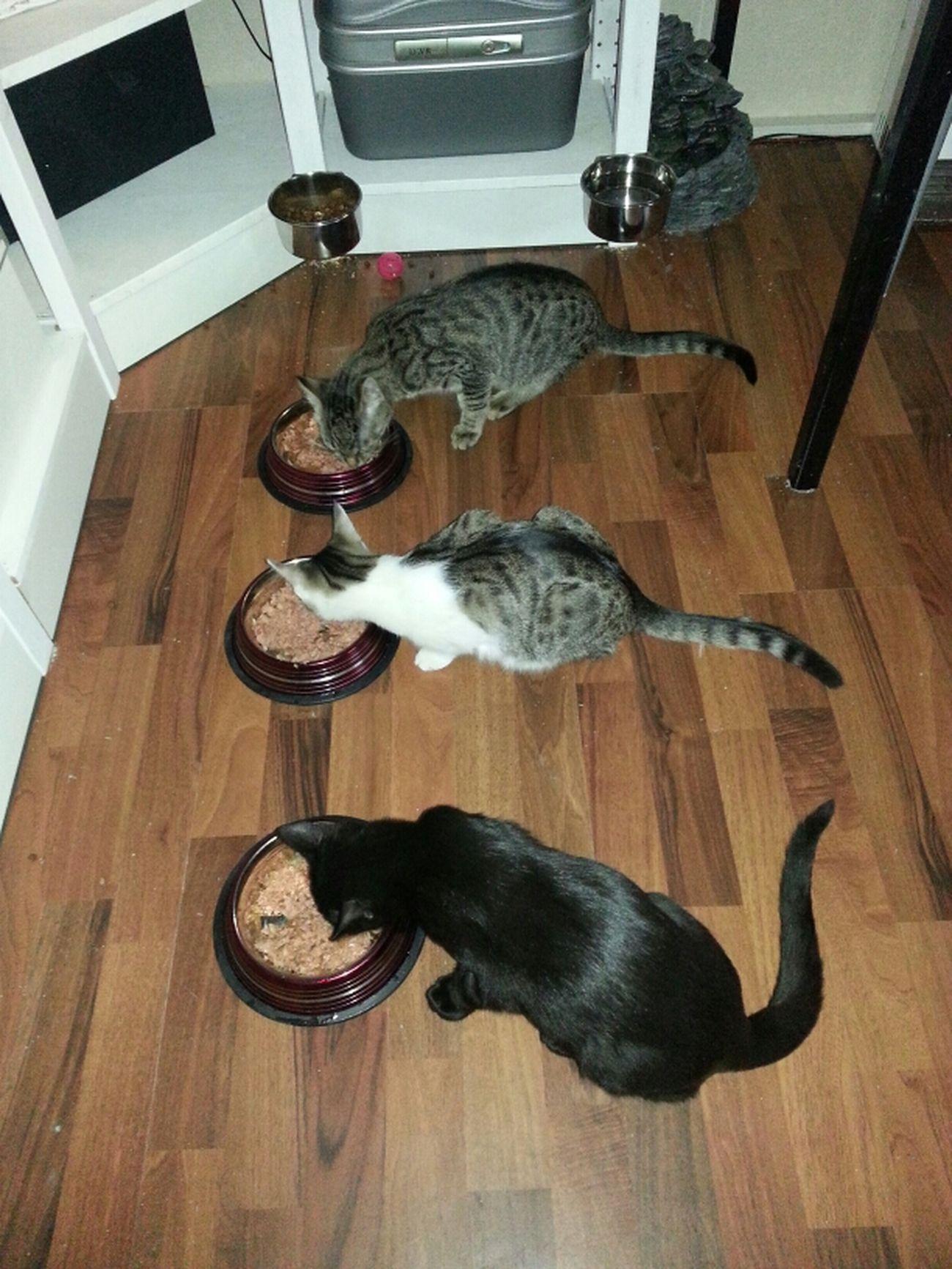 Fütterung der Raubtiere Food Animals Essen Katze Futtern Cat