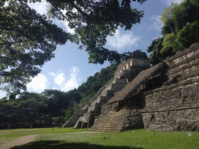 Jungle Nature Beautiful Ruins Life Palenque, Chiapas