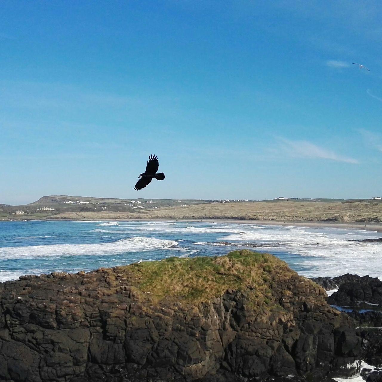 Ocean Sea Beach Horizon Over Water Water Flying Outdoors Motion Bird Nature Scenics One Animal Adventure Vacations Traveling Ireland🍀