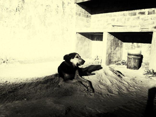 #Animals #blackandwhite #b&w