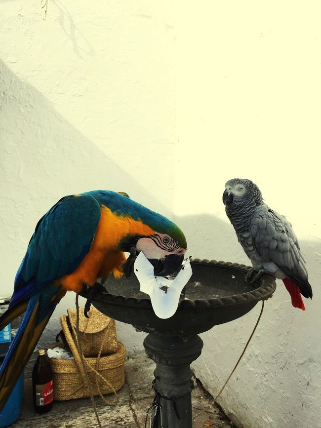 Parrot Arcosdelafrontera Sunday The Places I've Been Today Holiday