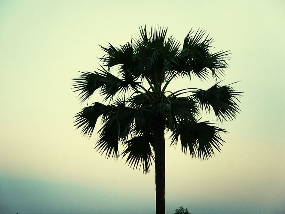 Sky Alone Trees