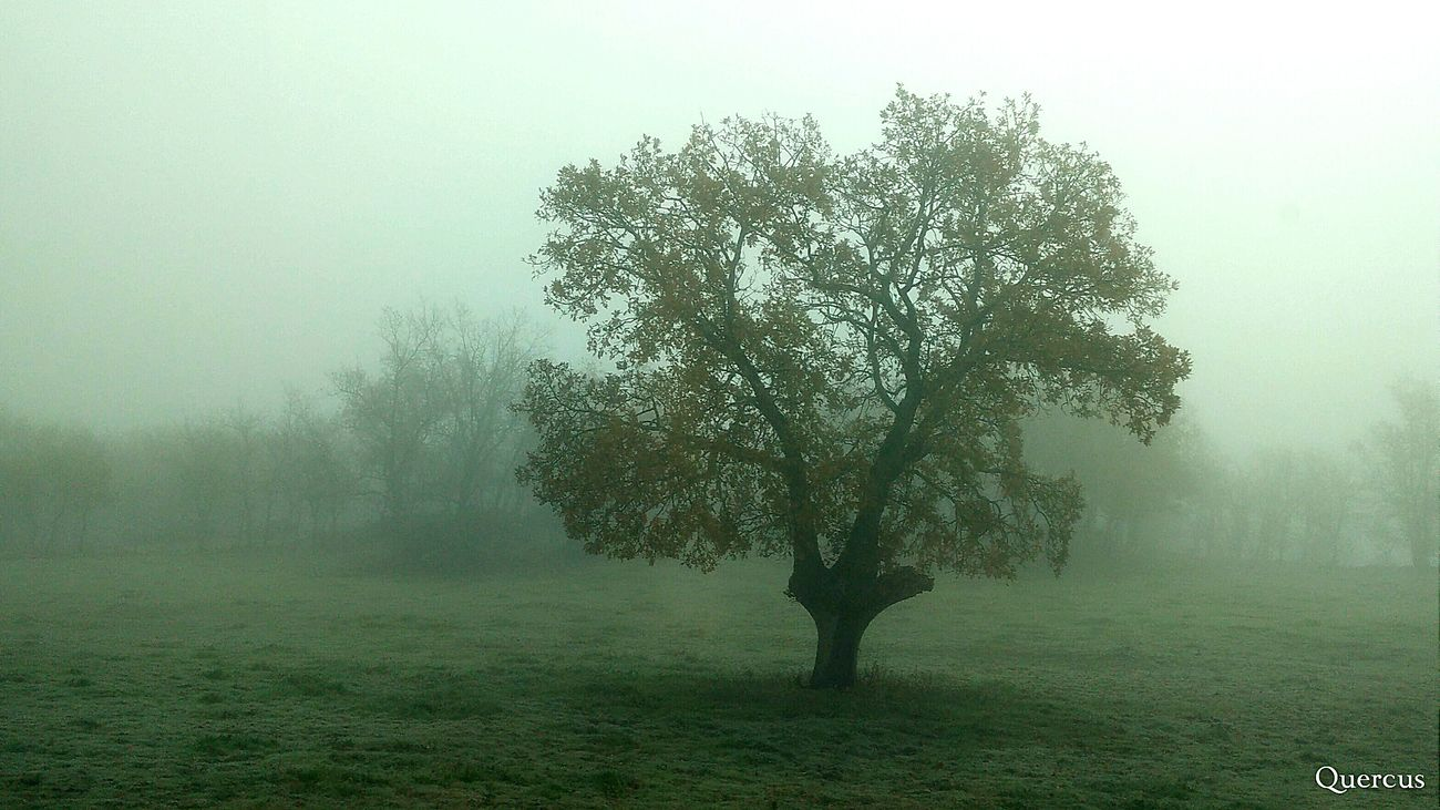 Niebla LosColoresdelaLuz Fog In The Trees EyeEm Nature Lover