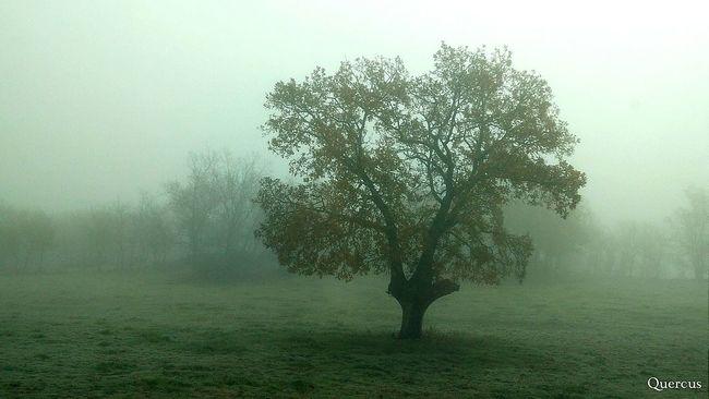 Niebla LosColoresdelaLuz Fog In The Trees EyeEm Nature Lover