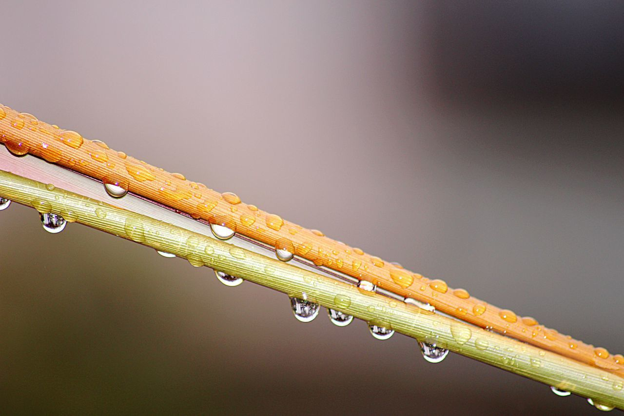 drop, water, close-up, wet, no people, focus on foreground, nature, outdoors, day, fragility, raindrop, freshness, beauty in nature, dripping