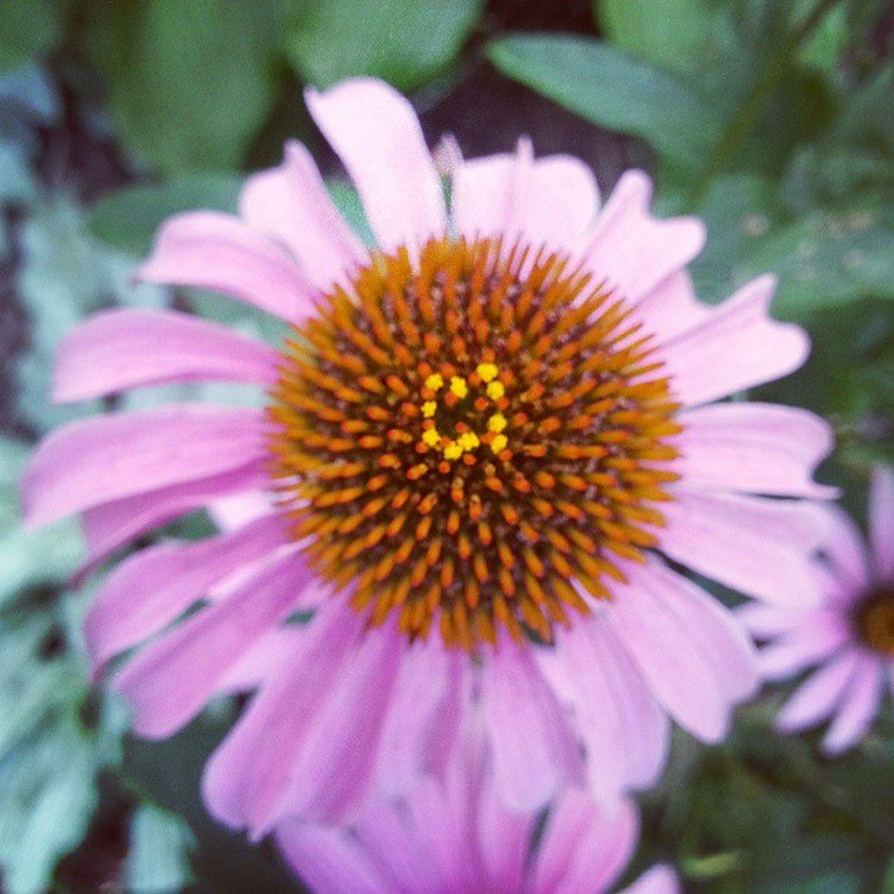 Flower Pinkandorange Pink Pinkflower orangeflower nature mothernature naturelovers nature_perfection