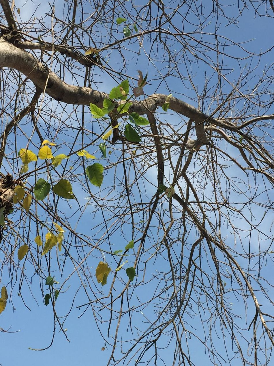 Branch Tree Nature Low Angle View Growth Yellow No People Sky Outdoors Beauty In Nature Sun Fruit Tranquility Flower Day Close-up Fresh In The Dry Born To Be Wild Born Green Alive Changes Life Is Change