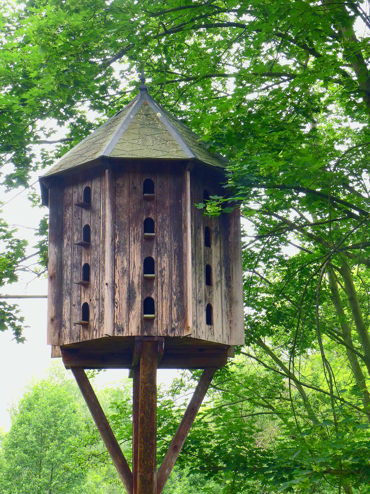 Architecture Built Structure Low Angle View Pigeonry Plant Taubenhaus Tranquility Tree Wood - Material