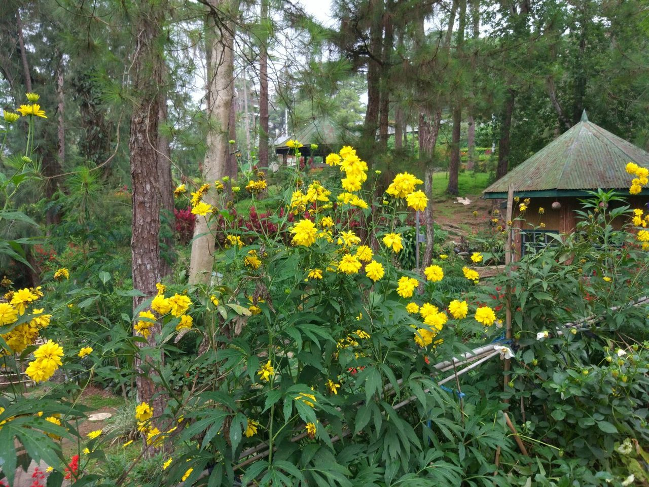 flower, growth, tree, nature, plant, outdoors, day, yellow, forest, no people, tree trunk, beauty in nature, tranquility, freshness, fragility, flower head