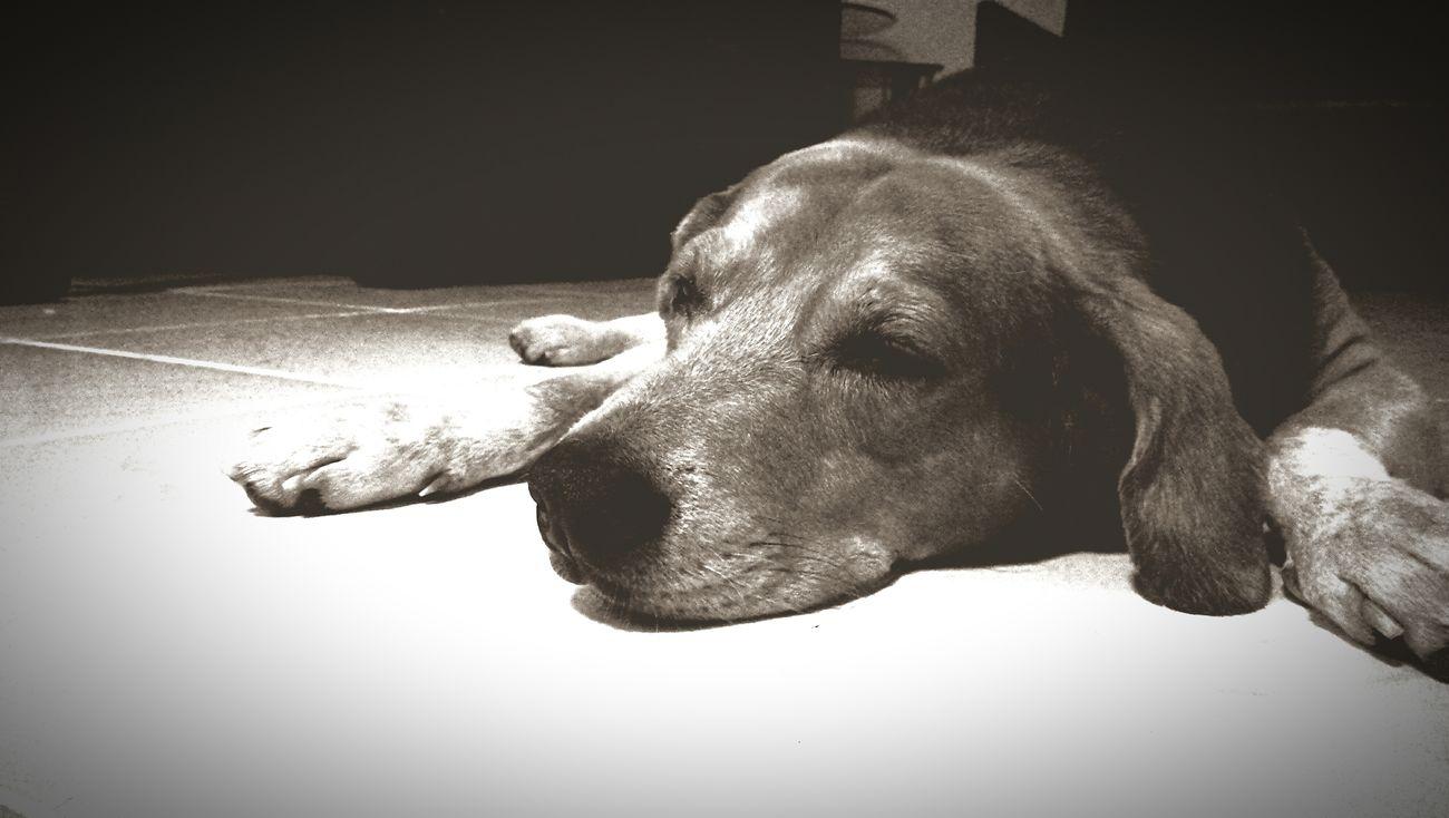 My 10 year old boy.. 😘 Dog Beagle Beagle Love