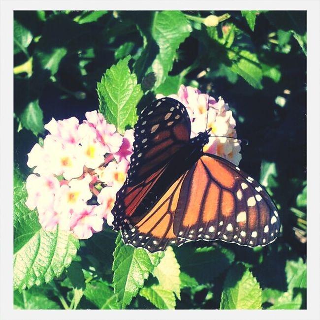 Myownphoto Butterfly Soamazing