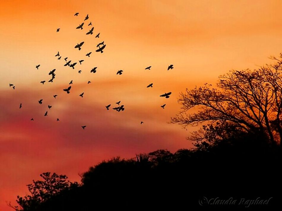 Bird Sunset Silhouette Flock Of Birds Large Group Of Animals Flying Animal No People Outdoors Nature Birds In Flight EyeEmNewHere Naturelover Mountain Beauty In Nature Sky Sunset Silhouettes Sunset_collection Orange Color