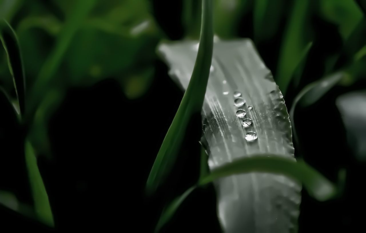Beauty In Nature Close-up Freshness Leaf Nature Outdoors Plant Rain Drops On Leaves