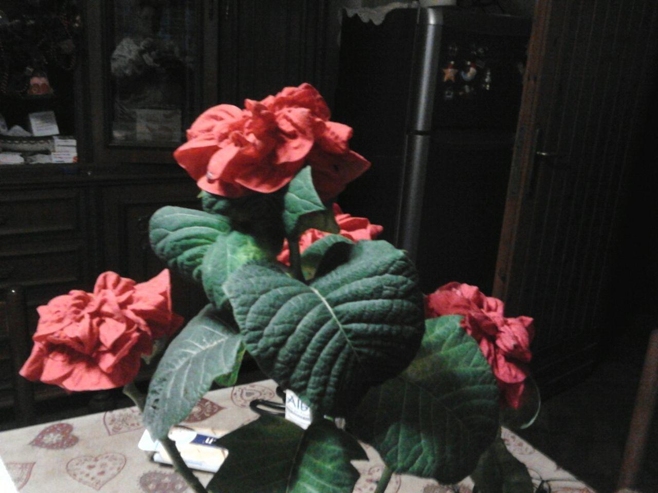 Flowers Natale 2012