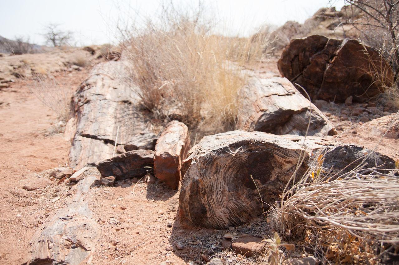 Dried Plants In Desert