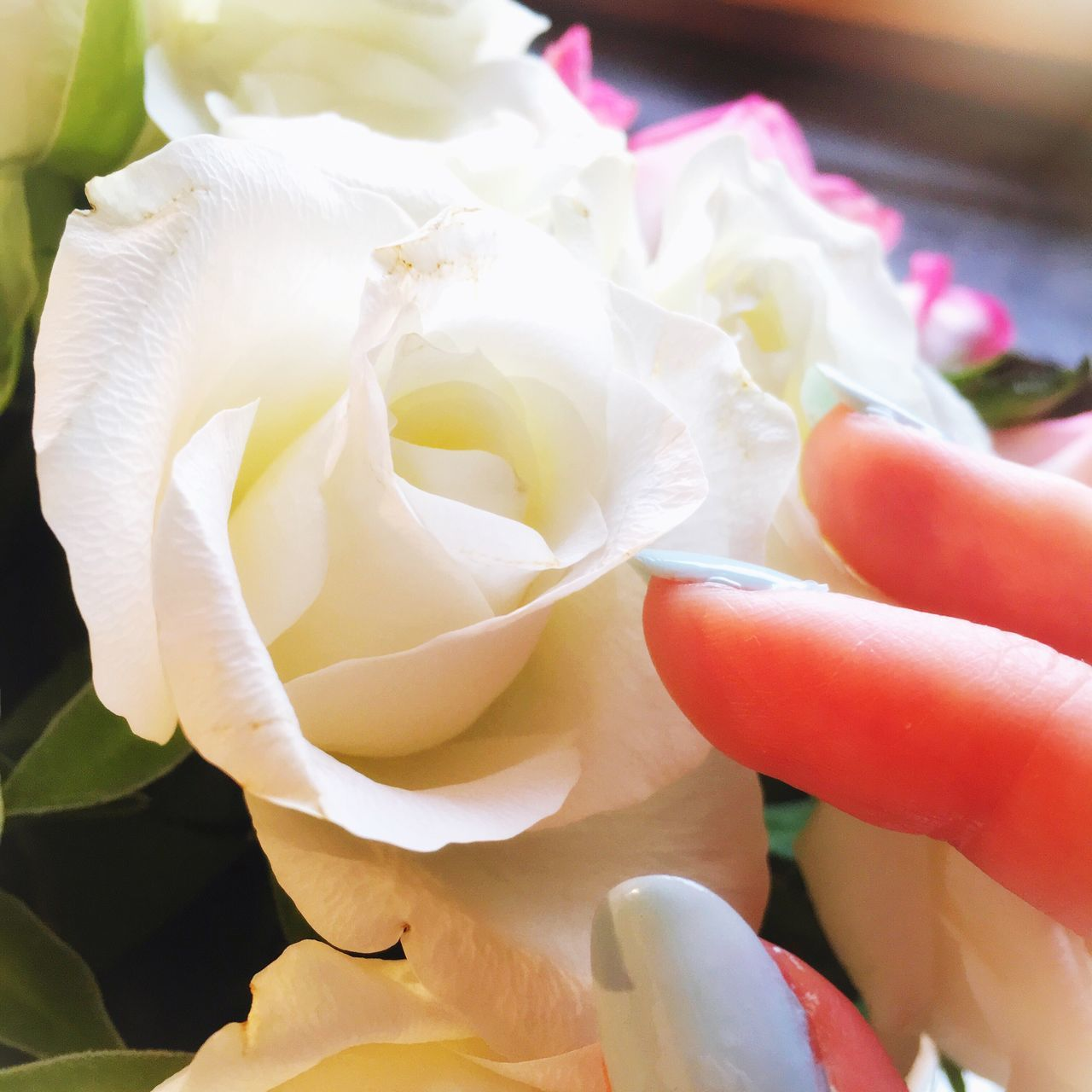 Cropped Hand Of Woman Touching Rose