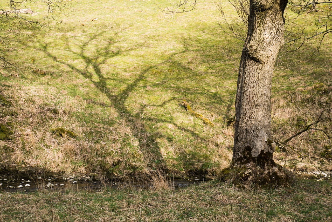 Branches Countryside Creepy Grass Light And Shadow Outdoors Shadow Shadows Sunlight Sunlight And Shadow Tree Trunk Yorkshire Yorkshire Dales