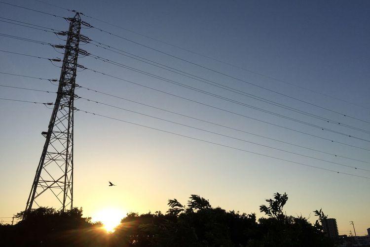 夕陽 Sunset 空 Sky 鉄塔 Pylon 電線 Electric Wires 鳥 Bird