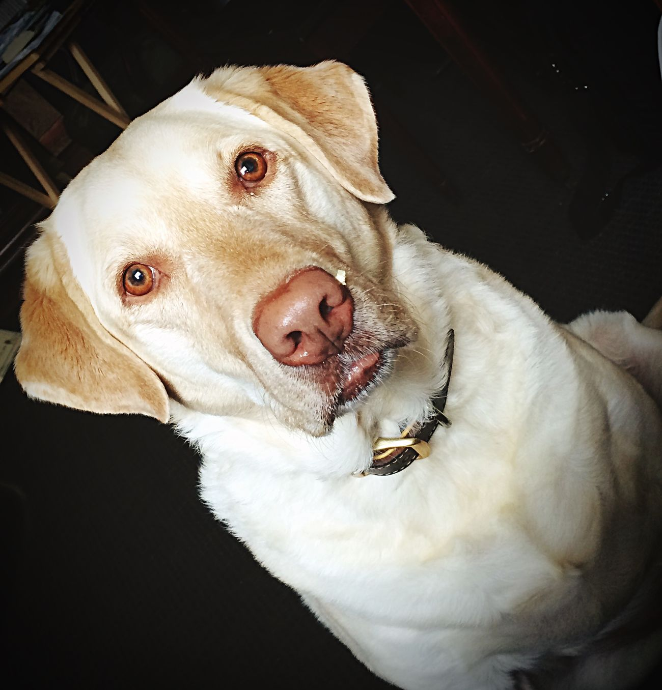 I have something where??? Yum! Popcorn! Cheese! My Pets Dog❤ Yellow Lab