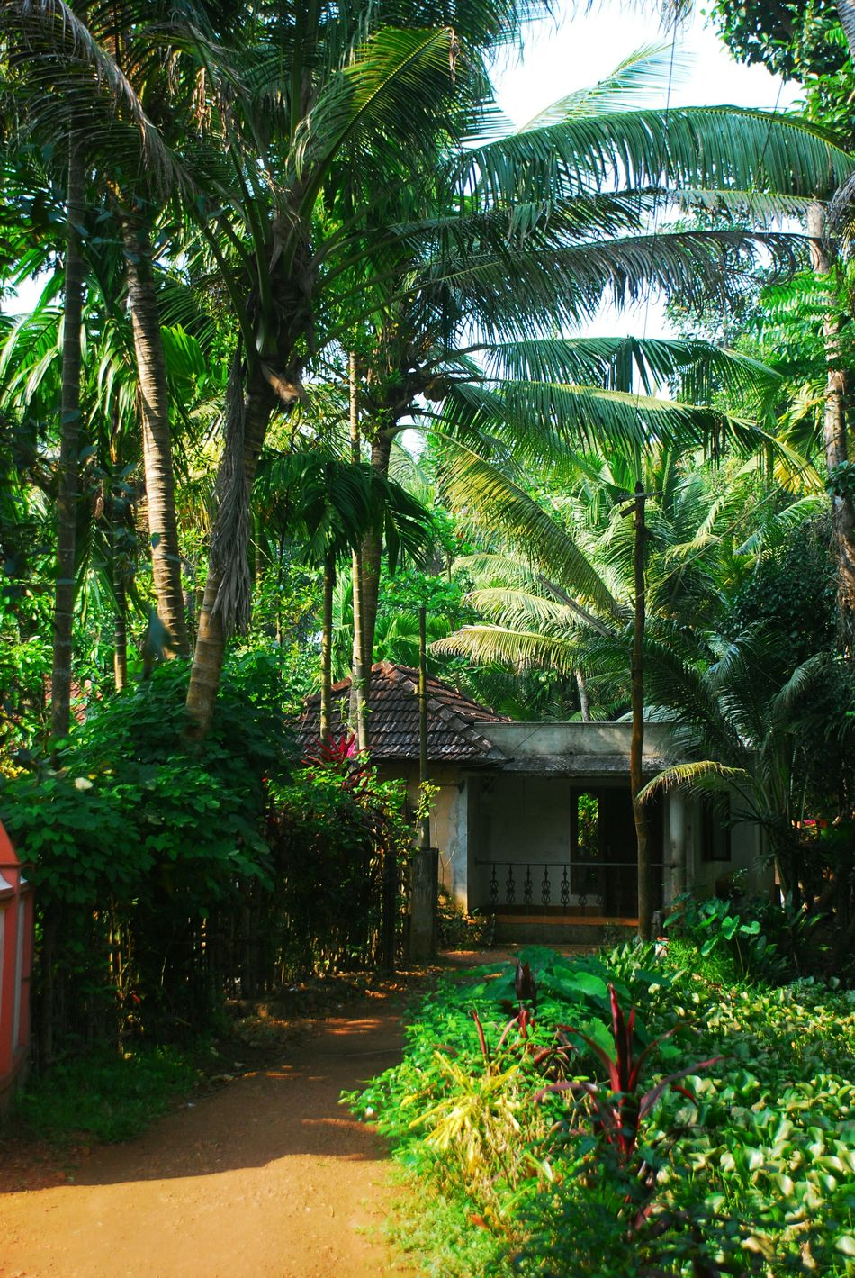 Hut in the jungle Beauty In Nature Day Diminishing Perspective Empty Footpath Grass Green Green Color Growing Growth Idyllic Kerala Lush Foliage Narrow Nature No People Outdoors Plant Scenics The Way Forward Tranquil Scene Tranquility Tree Tree Trunk Walkway