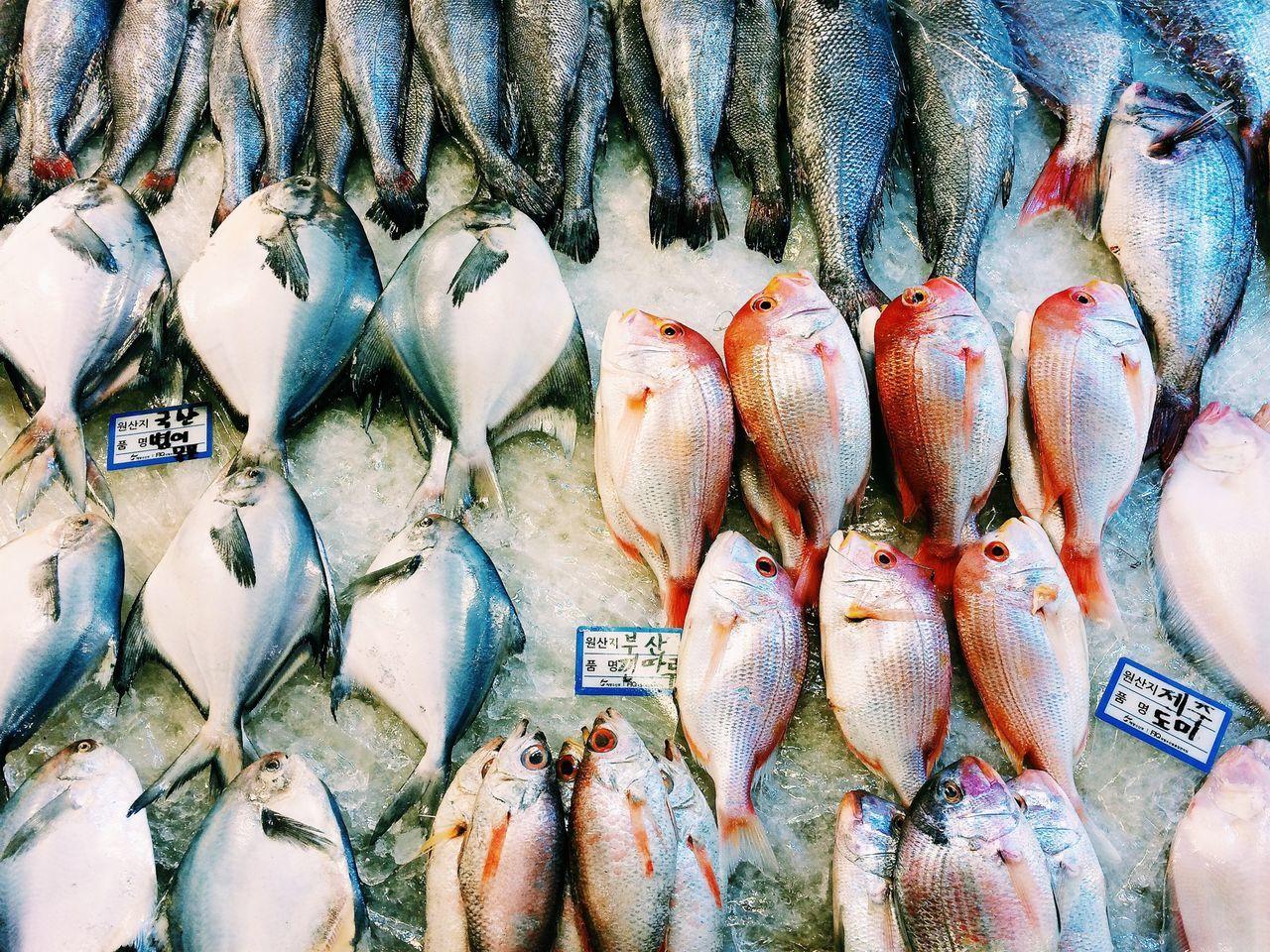 Beautiful stock photos of fish, Choice, Close-Up, Detail, Display