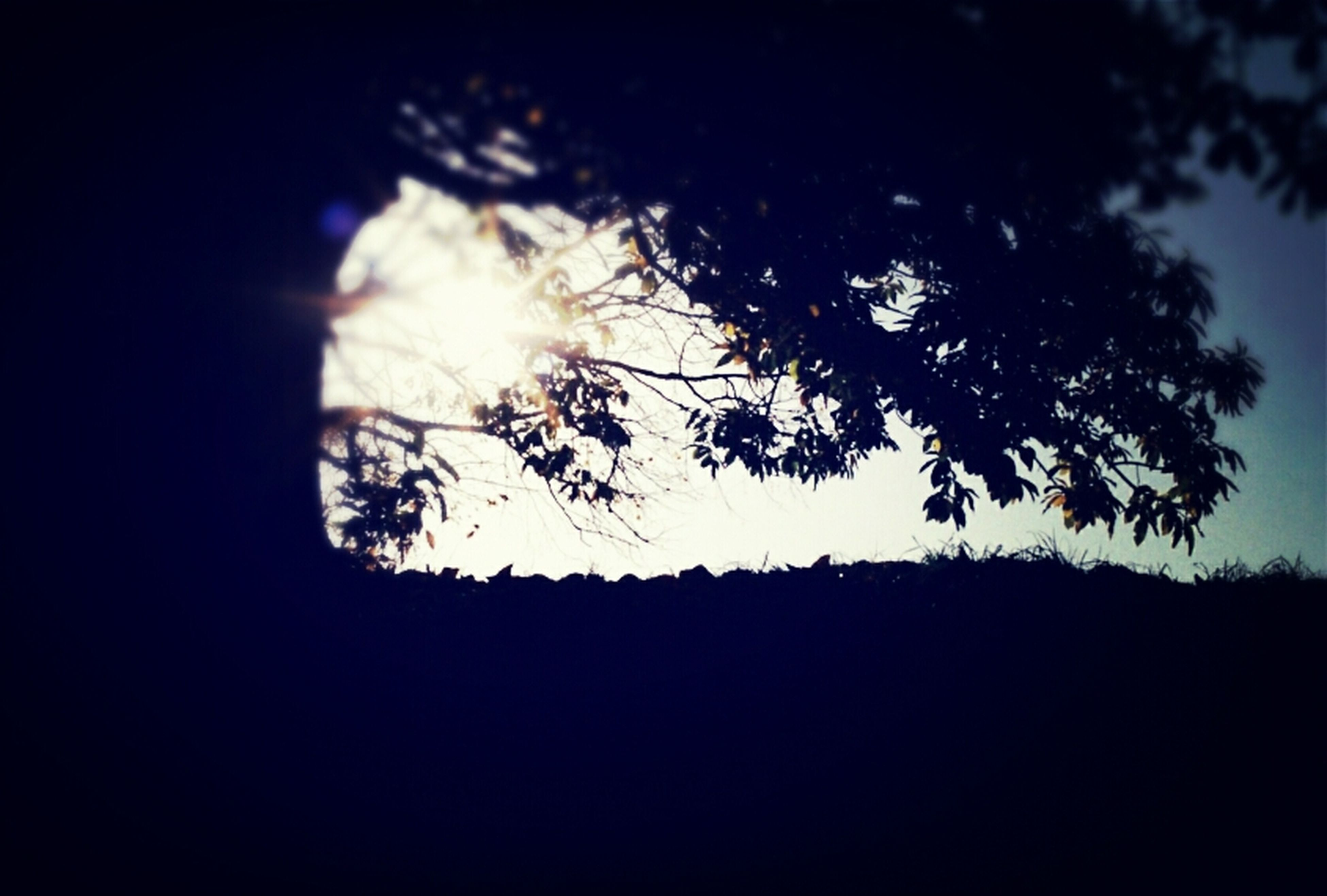 silhouette, tree, nature, beauty in nature, tranquility, sky, no people, growth, scenics, branch, outdoors, clear sky, day