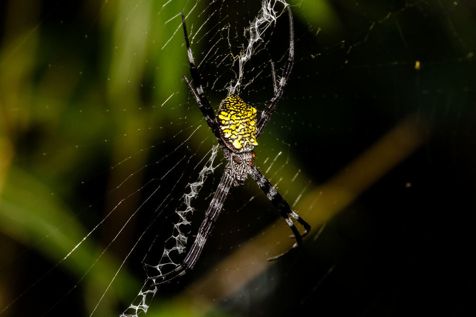Spider in its web. Insect Insect Macro  Insect Photo Insect Photography Insects  Jungle Macro Macro Insects Macro Nature Macro Photography Macrophotography Marco Nature Nature Photography Naturephotography Spider Spider Web Spiders Spiders Web Spidersweb Spiderweb Spiderworld Wild Wildlife & Nature Wildlife Photography