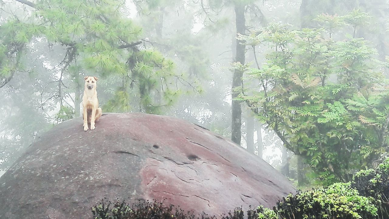 Vacation7.Chiangmai Thailand. Vacation Hello World Dog Forest Mist Morning Alone Gard Chiangmai Thailand