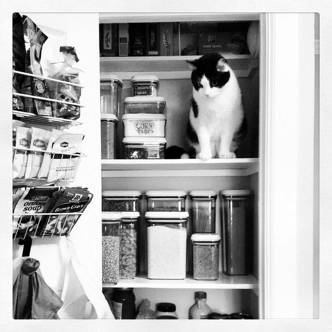 Richardthecat is helping me organize the pantry! OnanotherOCDbinge Anorganizedlifeisahappylife Pinterestmademedoit catsarefunny healthykitty