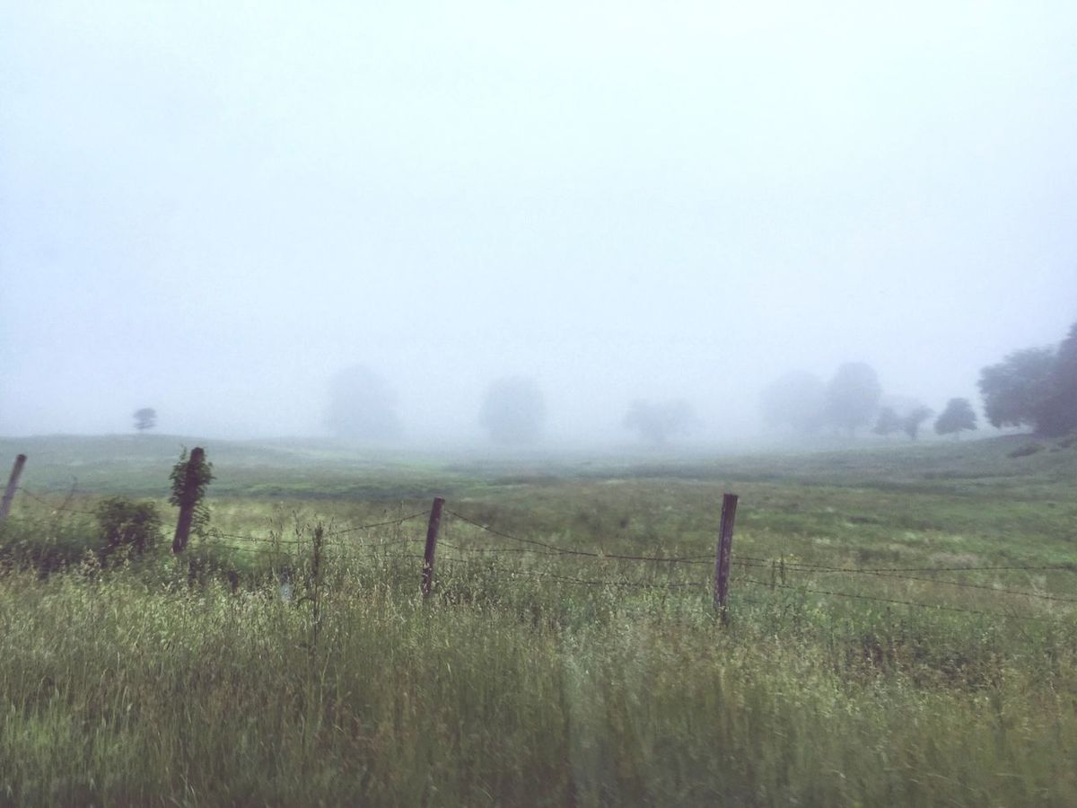 Misty Morning IPhoneography Iphone 6 Plus IPhone 6+ Fog Weather Foggy Field Landscape Tranquility Grass Tranquil Scene Scenics Grassy Beauty In Nature Nature Solitude Sky Day Sunrise - Dawn Rural Scene