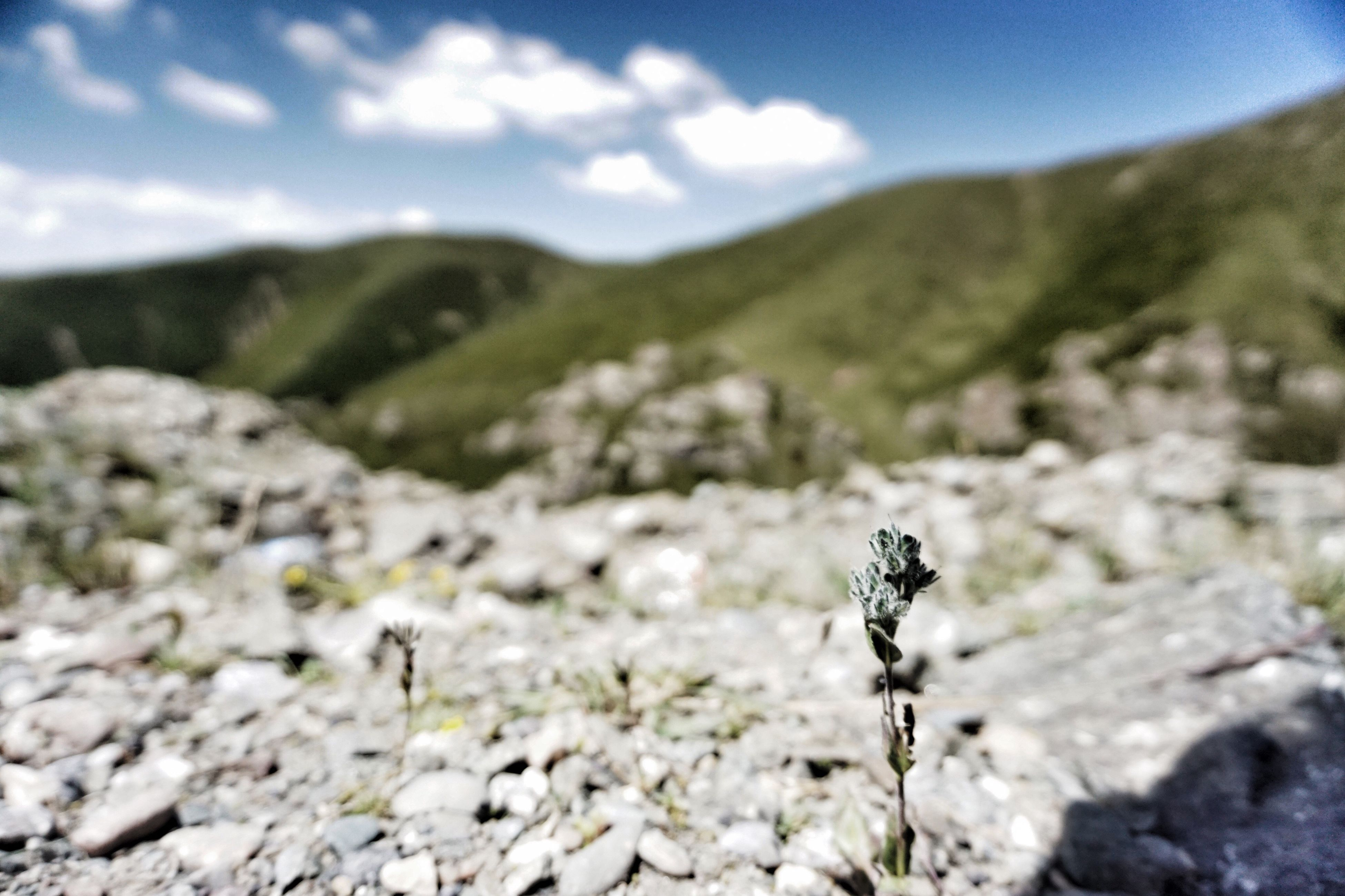 mountain, landscape, sky, tranquil scene, tranquility, nature, beauty in nature, scenics, plant, mountain range, focus on foreground, rock - object, non-urban scene, cloud - sky, field, growth, cloud, remote, day, hill